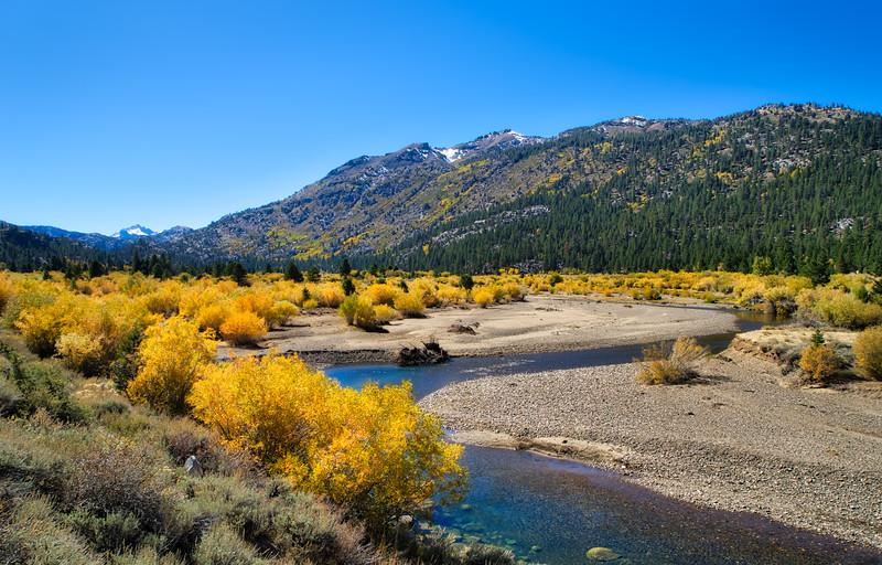 Aspen Groves along the West Walker River