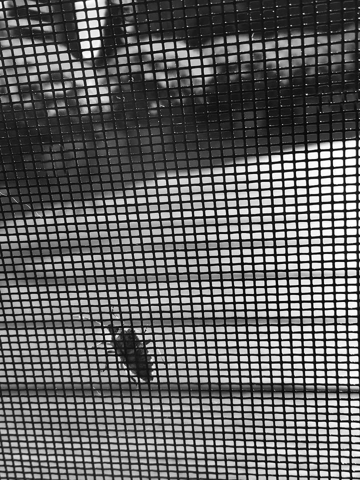 Looking Beyond What Bugs Us in Black and White
