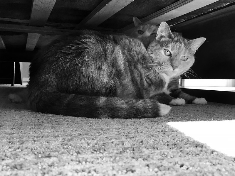 Finding Safe Haven Under the Bed in Black and White