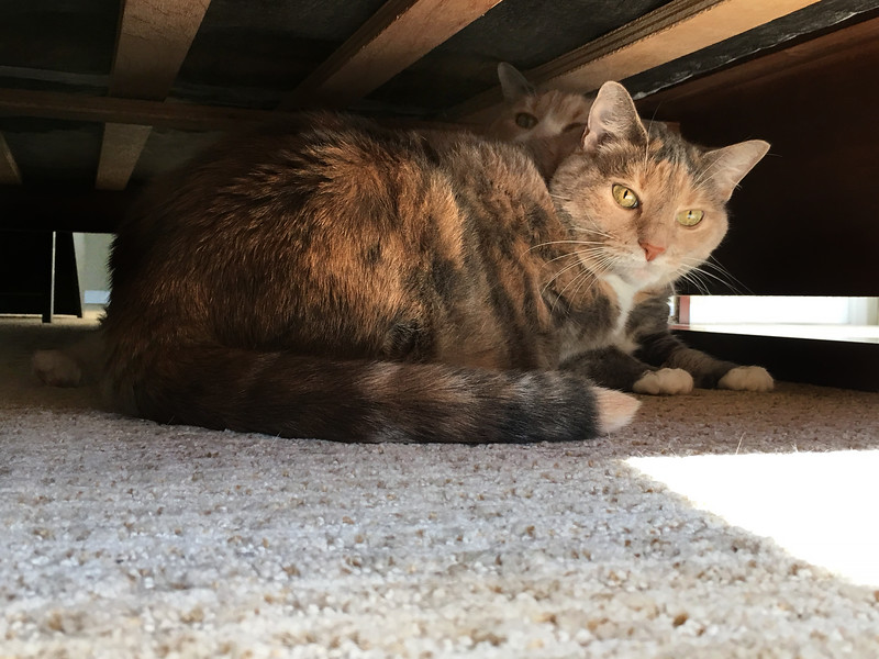 Finding Safe Haven Under the Bed in Color