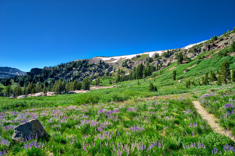 Wildflower Heaven Take 2