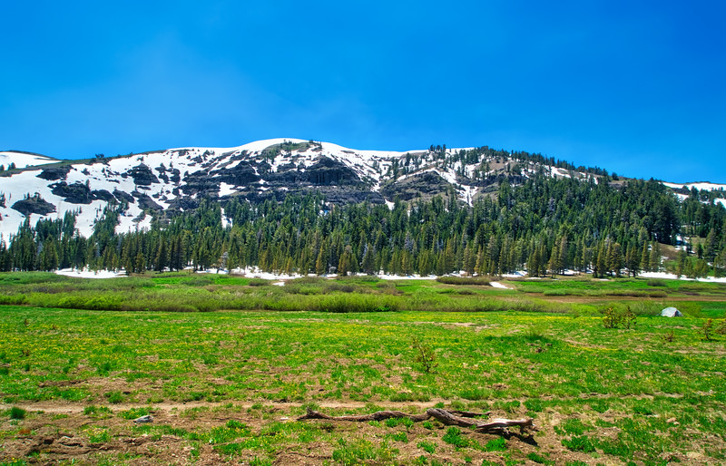 The PCT and TRT crossing Meiss Meadow in the early summer