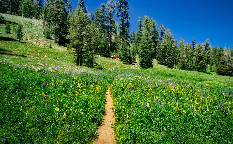 One of the many meadows on the PCT between Carson Pass and Echo Summit