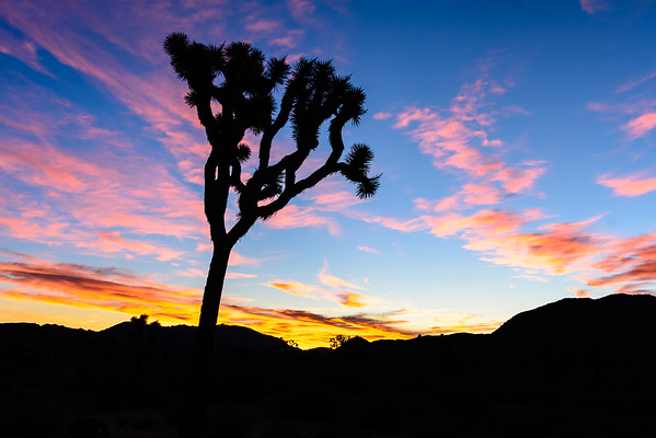 Sunrise at Joshua Tree National Park_