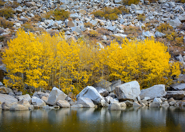 Fall Colors, Pond, Aspendell