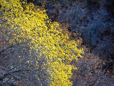 Yellow Outburst