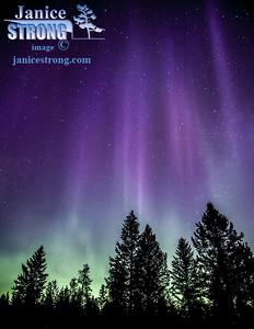 Janice Strong-Aurora-9135