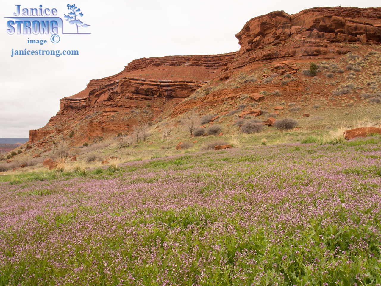 Red Stone and Pink Flowers