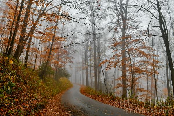 Autumn Haze