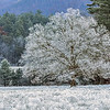 """Frosty Is """"The Tree"""""""