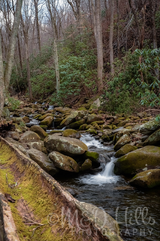 LeConte Creek