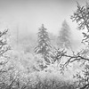 A Whister of Winter B&W