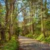 Dogwood Morning On Sparks Lane