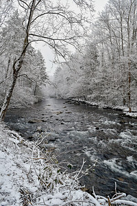 Cold Rush At Little River