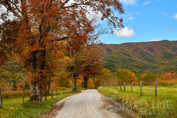 Fall Arrives On Sparks Lane