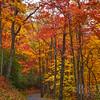 Autumn Drive Thru Roaring Fork