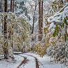 Winter Drive Thru Greenbrier