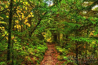 Forest Mystique