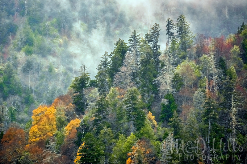 The True Essence Of The Smokies