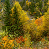 Autumn Bursts