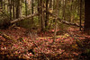 Maine_Fall7