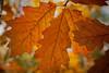 Maine_Fall1jpg