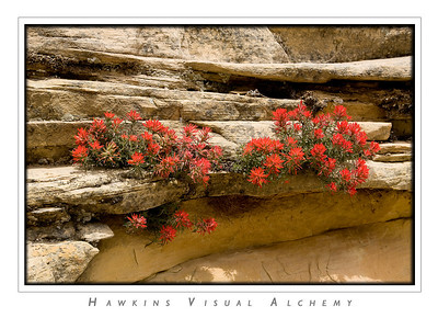 Zion_Mountain_Flower