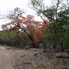 Lost Maples State Park, TX