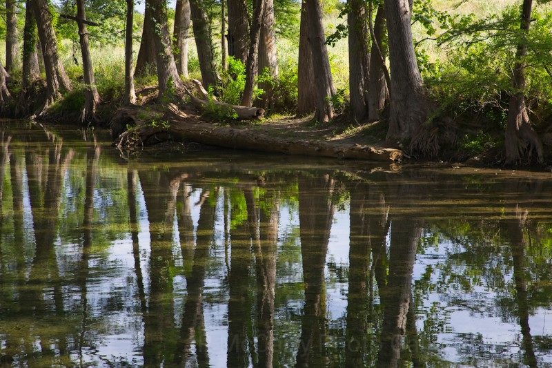 Test shooting my new Canon 5D Mark IV along the Medina river in Texas.