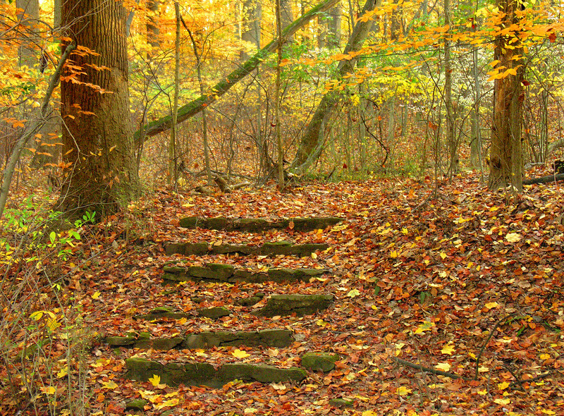 Woodland trail in autumn<br /> Woodend Sanctuary, Chevy Chase, MD