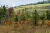 Cranesville Swamp Preserve in autumn<br /> Preston County, West Virginia (just across the border from Garrett County, Maryland)