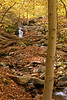 Woods along Cascade Run<br /> Patapsco Valley State Park, Elkridge, MD