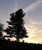 Tree silhouetted against sunset on the ridge<br /> Shenandoah National Park, VA