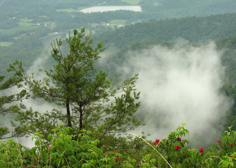 Up in the clouds near Skyline Drive<br /> Shenandoah National Park, VA