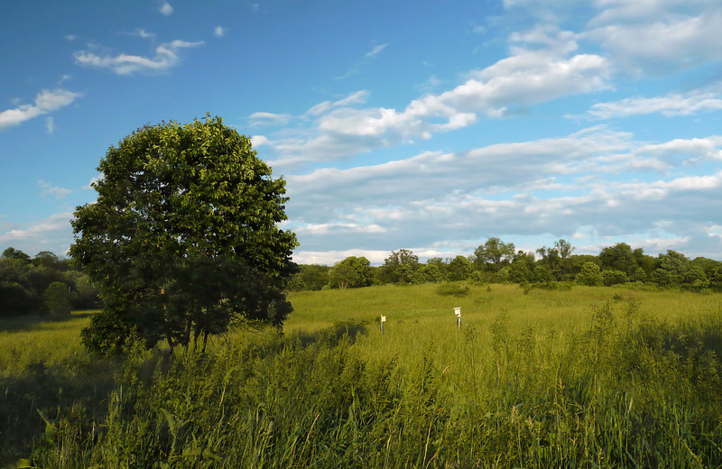 Early summer afternoon at Fox Meadow <br /> Rachel Carson Conservation Park, Brookeville, MD