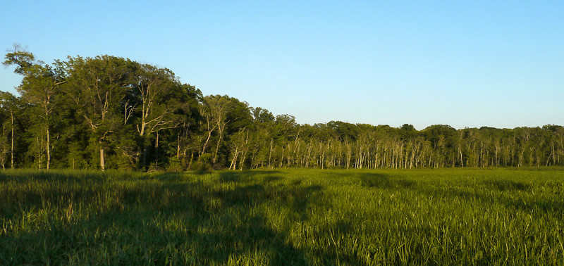 Marsh at sunset<br /> Piscataway Park, Accokeek, MD