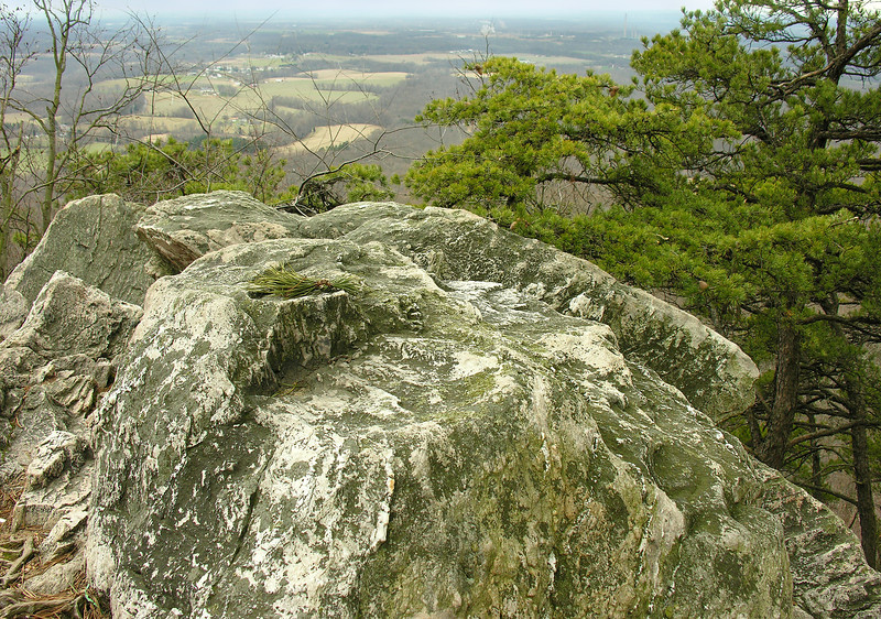 Sugarloaf Mountain summit with table mountain pines<br /> Barnesville, MD