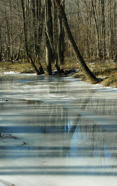 Patuxent River feeder stream frozen<br /> Fran Uhler Natural Area, Bowie, MD