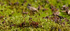 Moss sporophytes<br /> Stratford Hall Plantation, Stratford, VA