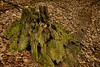 Decaying tree trunk along Hemlock Hollow trail<br /> R. R. Guest Shenandoah River State Park, Bentonville, VA