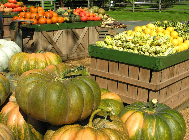 Fall pumpkin market<br /> Dickerson, Maryland