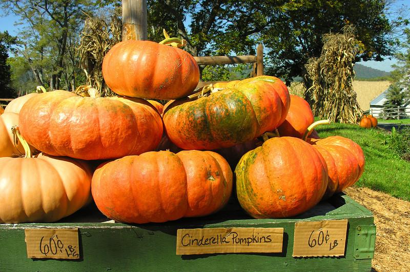 Fall pumpkin market<br /> Dickerson, Maryland