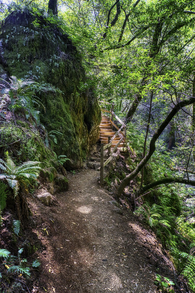 Stairs along the Cataract Falls Trail