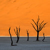 The 7 Trees of Deadvlei