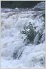 NA 37 Plant & Waterfall
