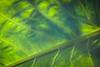 leaf DP-211B