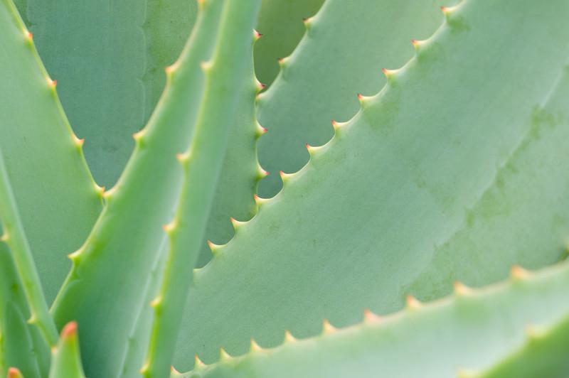 Aloe DP-2830B