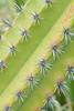 cactus DP-206B