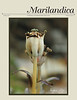 "<I>Shameless boasting: My image on the cover of Marilandica A Publication of the <A HREF=""http://mdflora.org"" TARGET=""_blank"">Maryland Native Plant Society</A> </I> Indian pipe (<I>Monotropa uniflora</I>) in fruit"