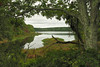 View of East Reservoir from rail trail<br /> Bells Neck Conservation Area, Cape Cod, MA